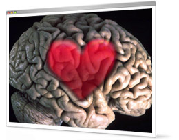 Brain on love